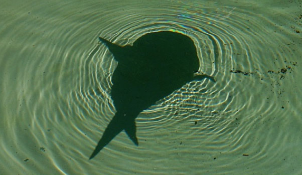Scary looking shadow in water